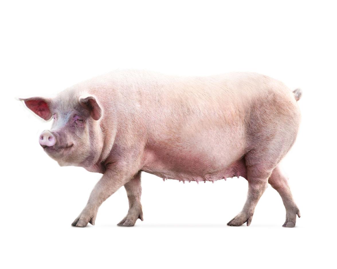 Agrivet - Agrolabo - Monoprop è la linea di conservanti per mangimi dedicati a bovini e suini